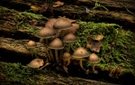 01410_mushroomsatjubileenaturetrailpark_1680x1050